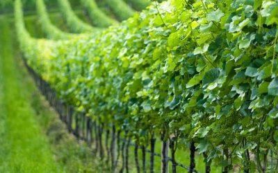 Salons des vins, Portes Ouvertes… tout 2020 au Marquis de Saint-Estèphe